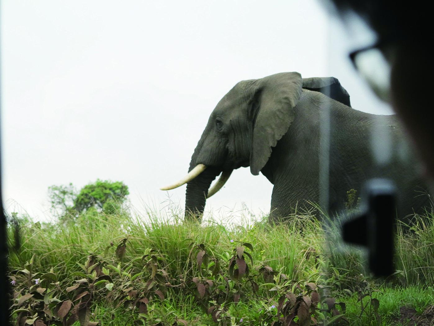 非洲坦尚尼亞國際志工服務學習 | 愛在非洲坦尚尼亞志工教育旅行