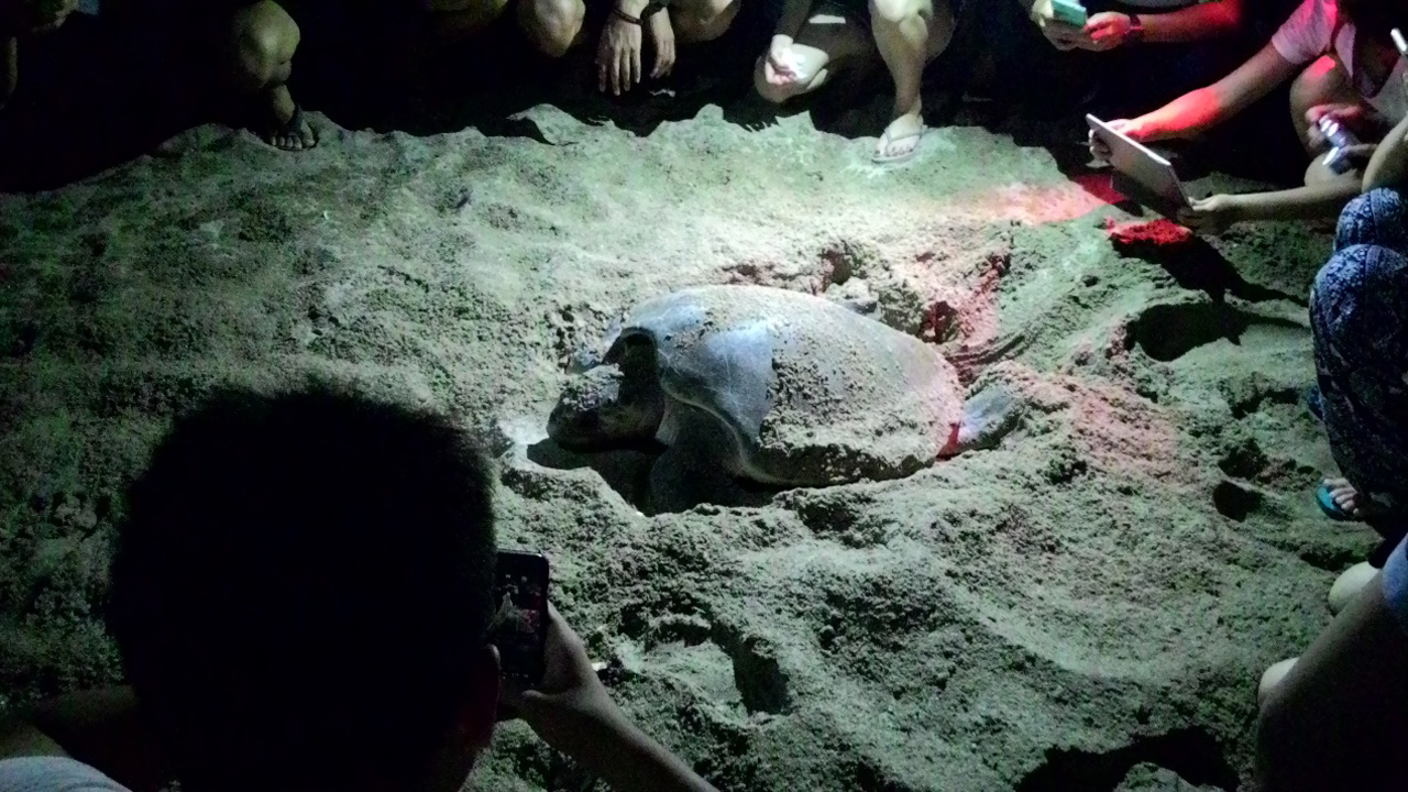 峇里島海龜保育暨文化志工服務學習 | 志在峇里 心在幫你