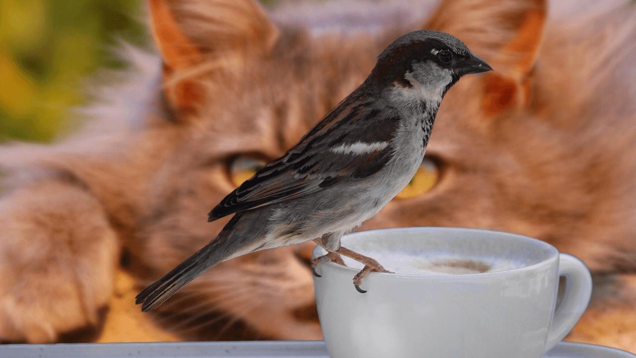 37屆全球華文學生文學獎得獎作品【我看見一隻鳥在喝咖啡】