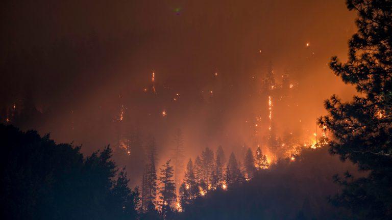 物種最殘忍的滅絕!亞馬遜雨林大火對動物傷害究竟有多大?