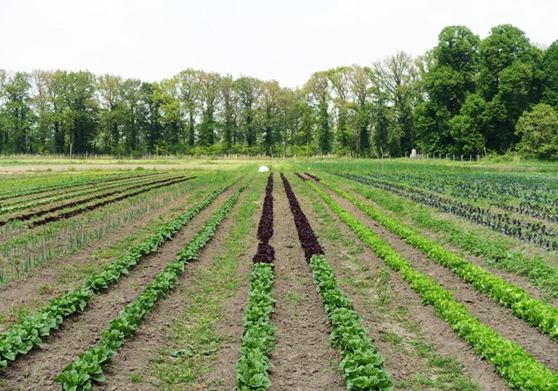 休閒和事業的完美結合 荷蘭「紳士農場」厲害在哪?