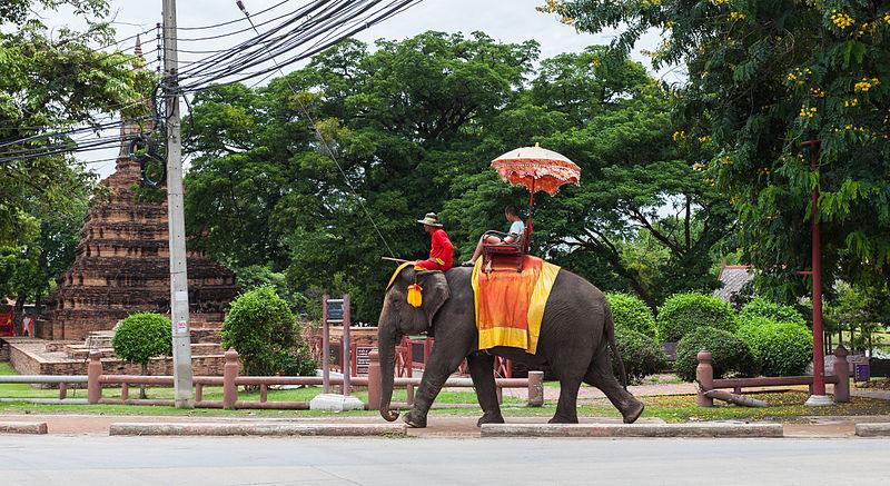 不再把動物當賺錢工具!吳哥窟宣布永久禁止騎象