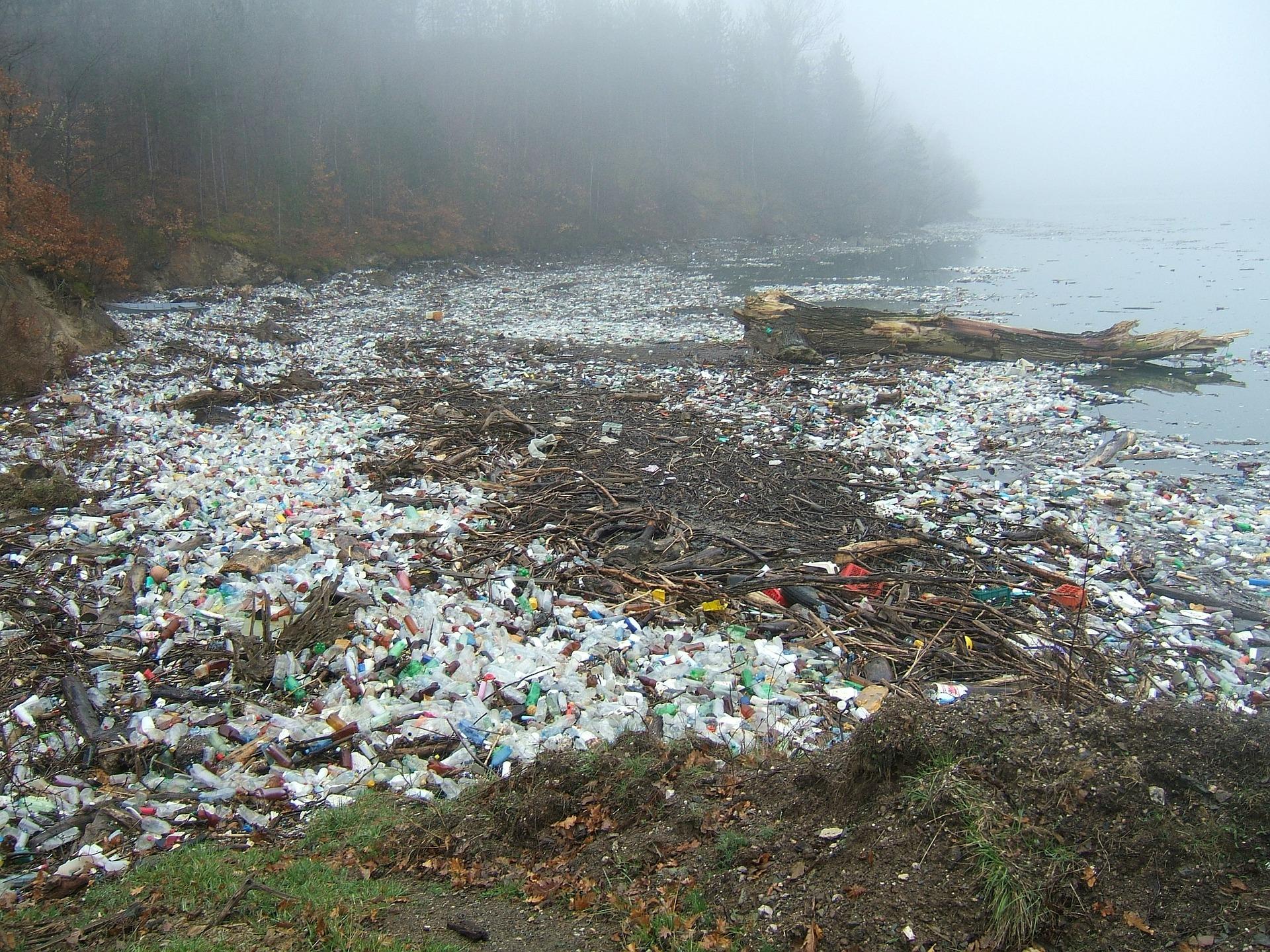 【慢魚串連】當海洋成了塑膠湯│魚肝腸病變腫瘤,塑膠重返人類食物鏈