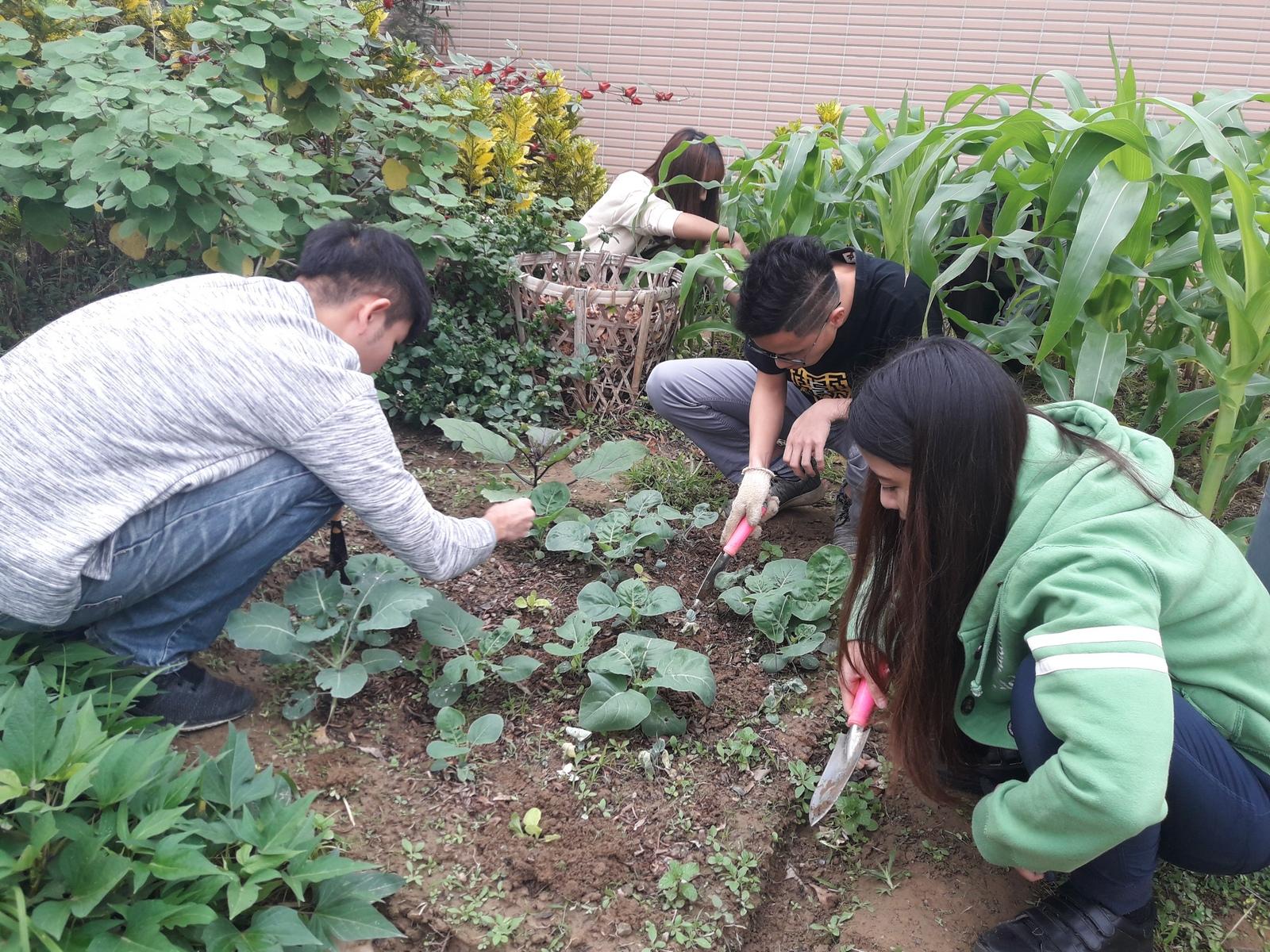 食農教育 即是「全人教育」