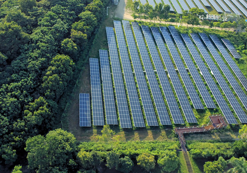 不砍一棵樹!奇美花五倍時間蓋出最「綠」太陽能電廠!